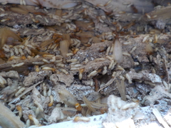 白蟻駆除・予防消毒・新築防蟻処理のご依頼・調査他害虫等のご相談お受け致します。