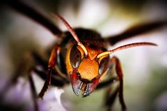 ハチの駆除承ります!!